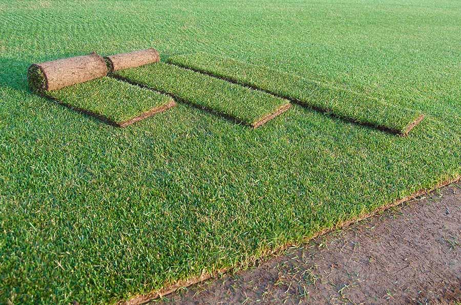 Corso base sul tappeto erboso associazione florovivaisti for Tappeto erboso a rotoli prezzi