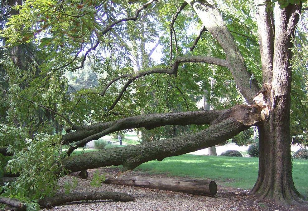 La stabilità degli alberi. Fenomeni meccanici e implicazioni legali dei cedimenti degli alberi